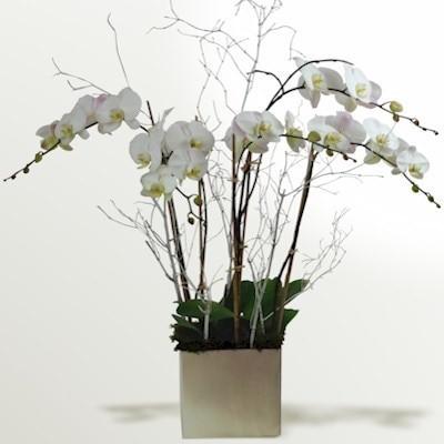 orhideea fluture