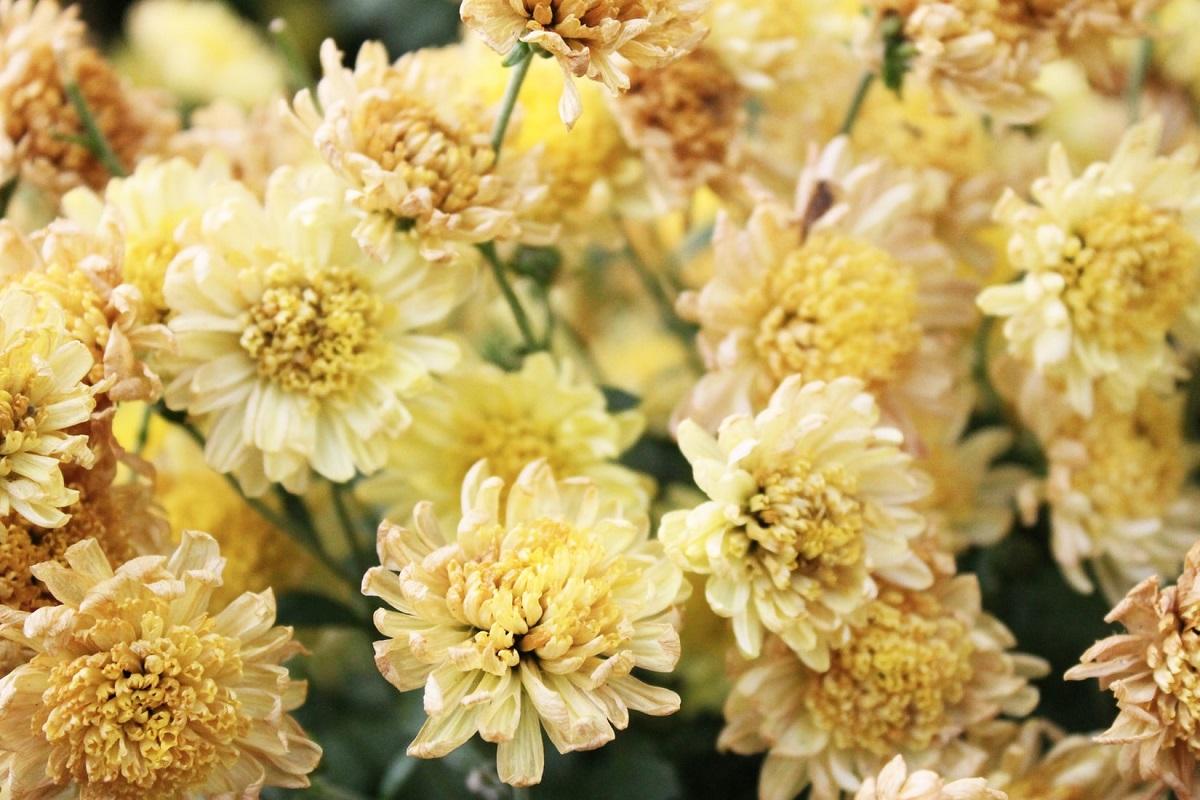 Un cadou floral unic si memorabil pentru ziua de nastere – pentru sarbatoritii lunii noiembrie